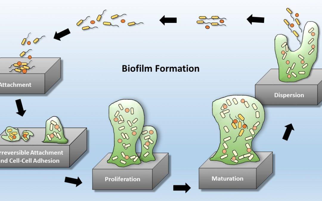 CBE Regulatory Meeting: Anti-Biofilm Technologies: Pathways to Product Development