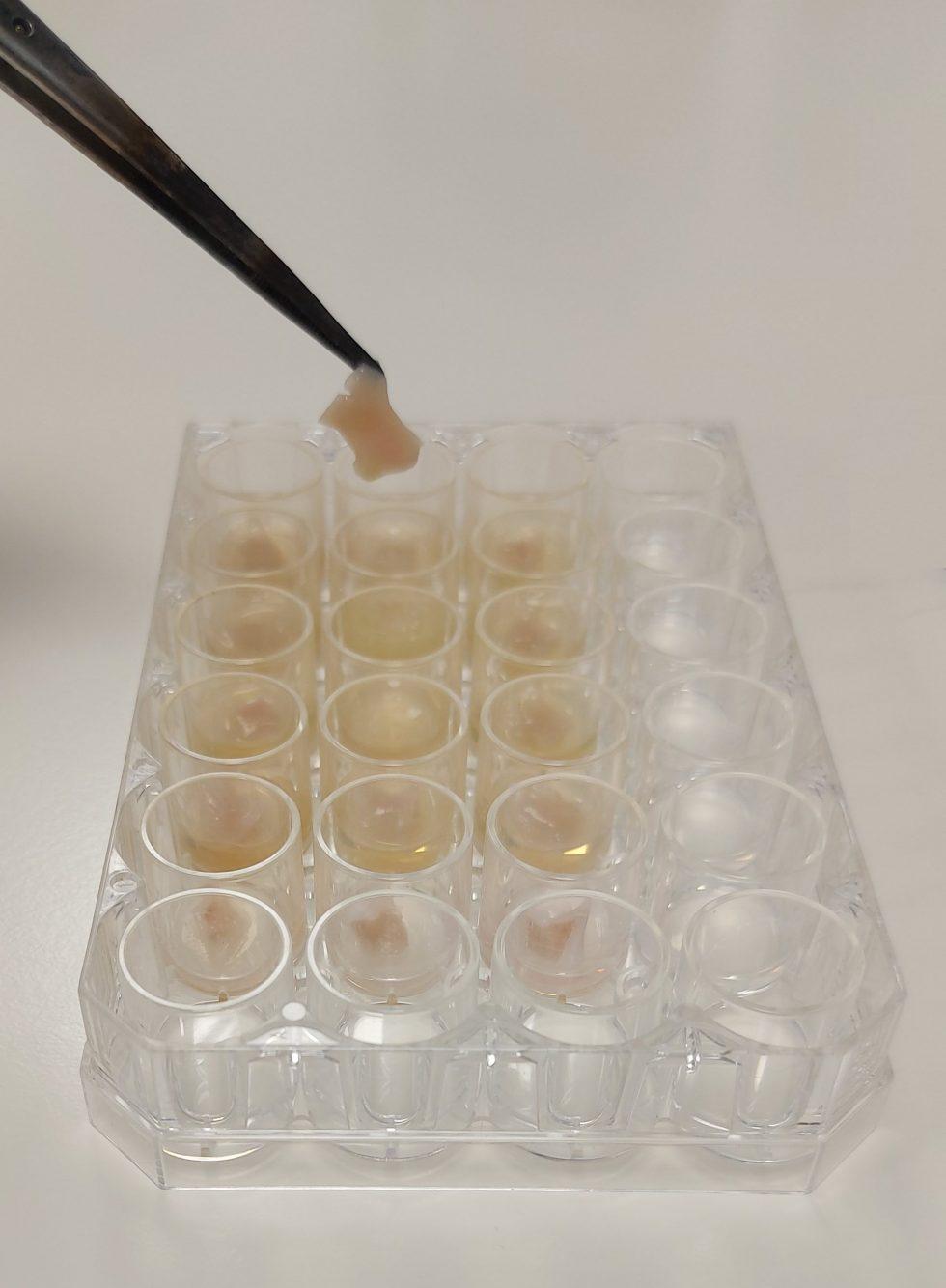 Accredited ex vivo Lung Model Biofilm Testing